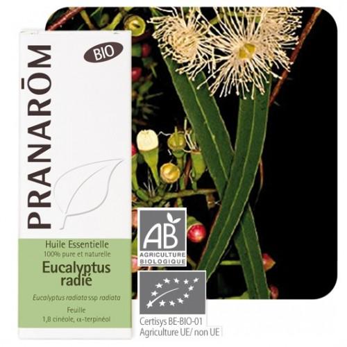 Essentiele olie bio Eucalyptus radiata 10 ml (Pranarôm)