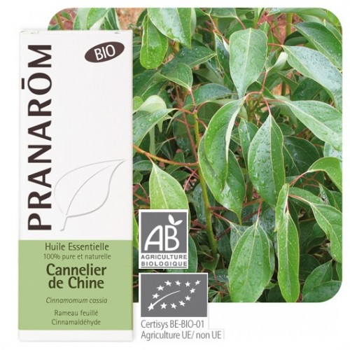 Cannelier de Chine bio 10 ml (Pranarôm)