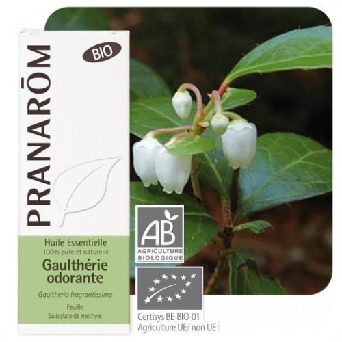 Gaulthérie odorante bio 10 ml (Pranarôm)
