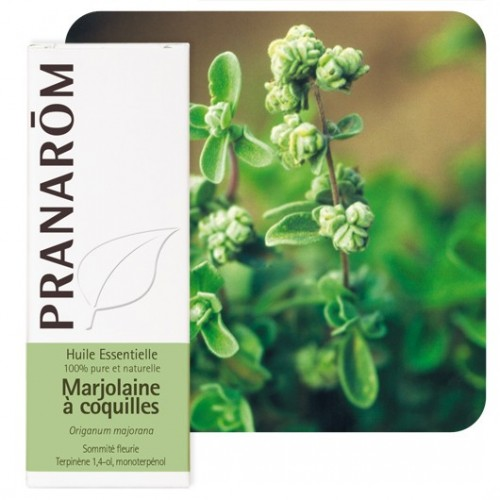 Marjolaine à coquilles 5 ml (Pranarôm)