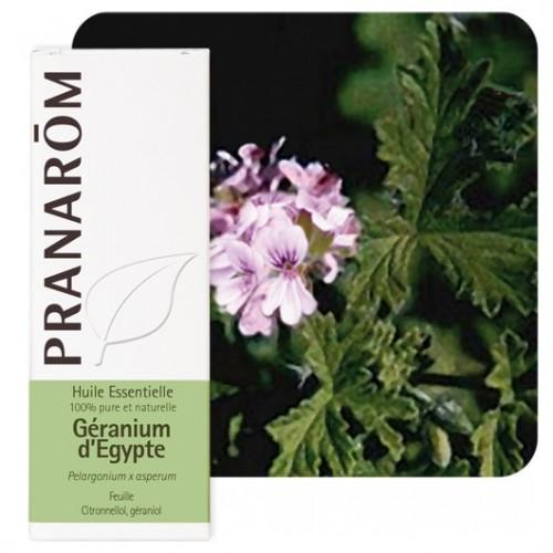 Egyptische rozen geranium essentiële olië 10 ml (Pranarôm)