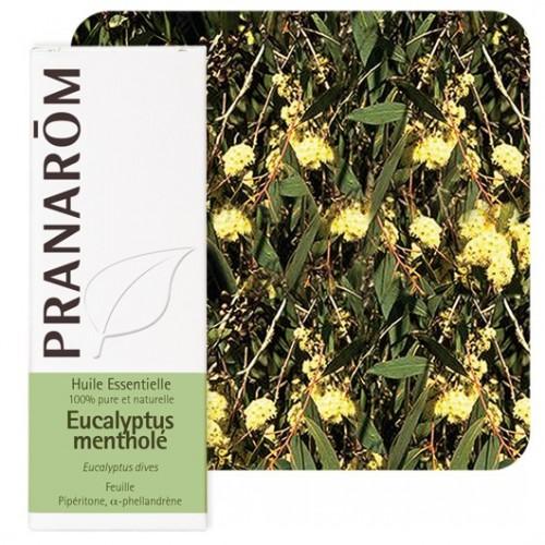 Eucalyptus mentholé 10 ml (Pranarôm)